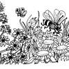Desenhos colorir Meio Ambiente 14
