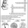 atividades corpo humano 29