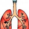 atividades corpo humano aparelho respiratório