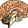 atividades corpo humano cérebro 03