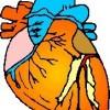 atividades corpo humano coração