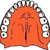 atividades corpo humano dentes