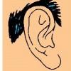 atividades corpo humano orelha