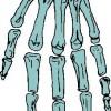 atividades corpo humano osso da mão