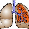 atividades corpo humano pulmão