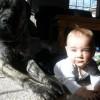 Crianças e animais 16