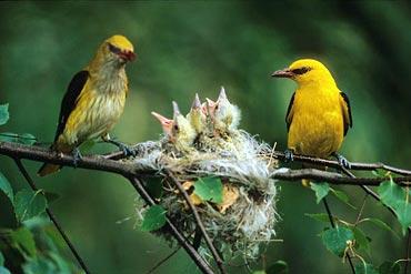 Pássaros e o ninho