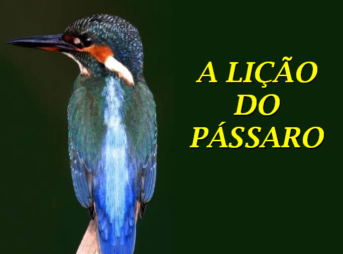 A lição do pássaro