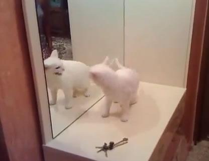 Gato valente briga com próprio relfexo