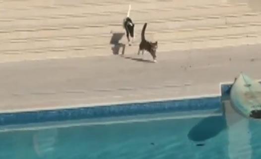 Gato escapando de cachorro